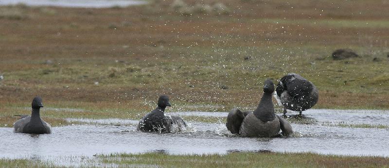 warum baden vögel